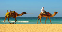 Bedouin & camels on the north African coast
