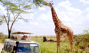 8 Day Kenya Safari w/ flights from JFK