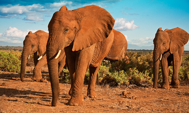 14-Day Kenya & Tanzania Safari w/ Int'l Air, $500 off
