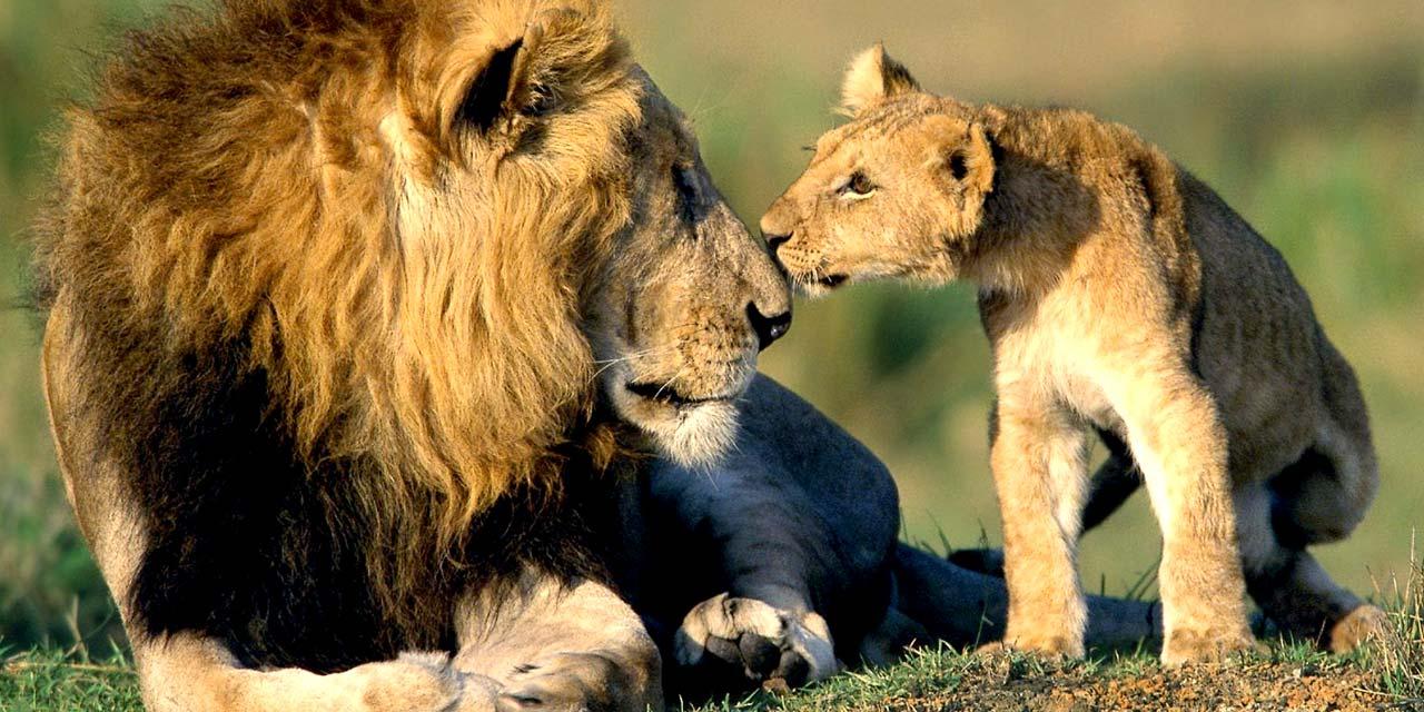 Kenya Safari Express