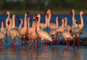 Flamingos at the Waterhole