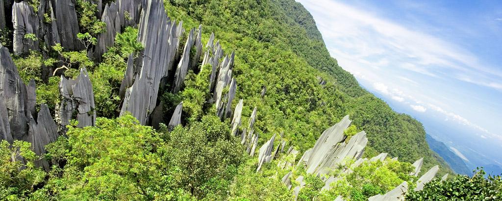 Limestone pinnacles, Mulu National Park