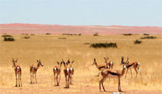 Namib Naukluft Lodge wildlife