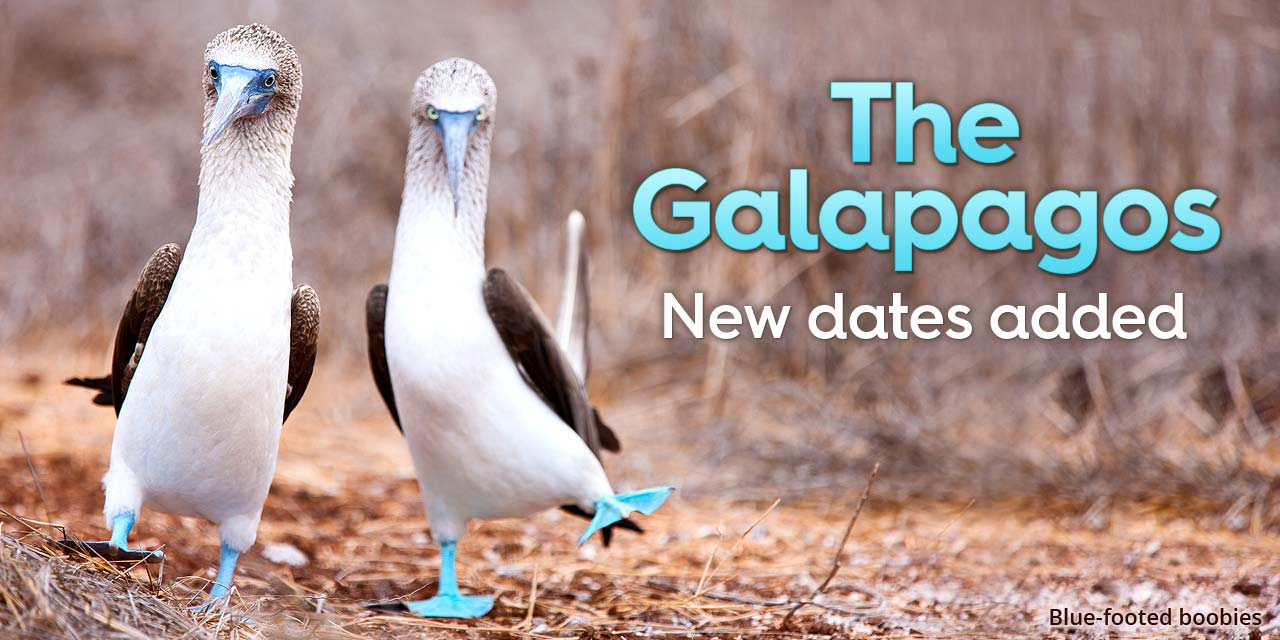 The Galapagos: new dates added!