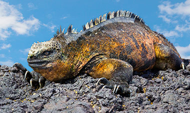 9 Day Ecuador w/ 4 Night Galapagos Cruise, $500 off