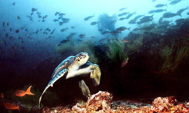 Galapagos Islands Wildlife Discovery